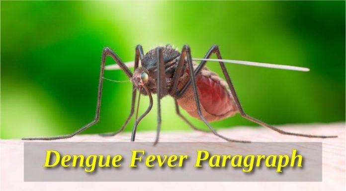 Dengue Fever paragraph