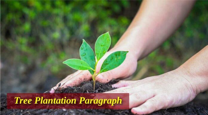 Tree Plantation Paragraph